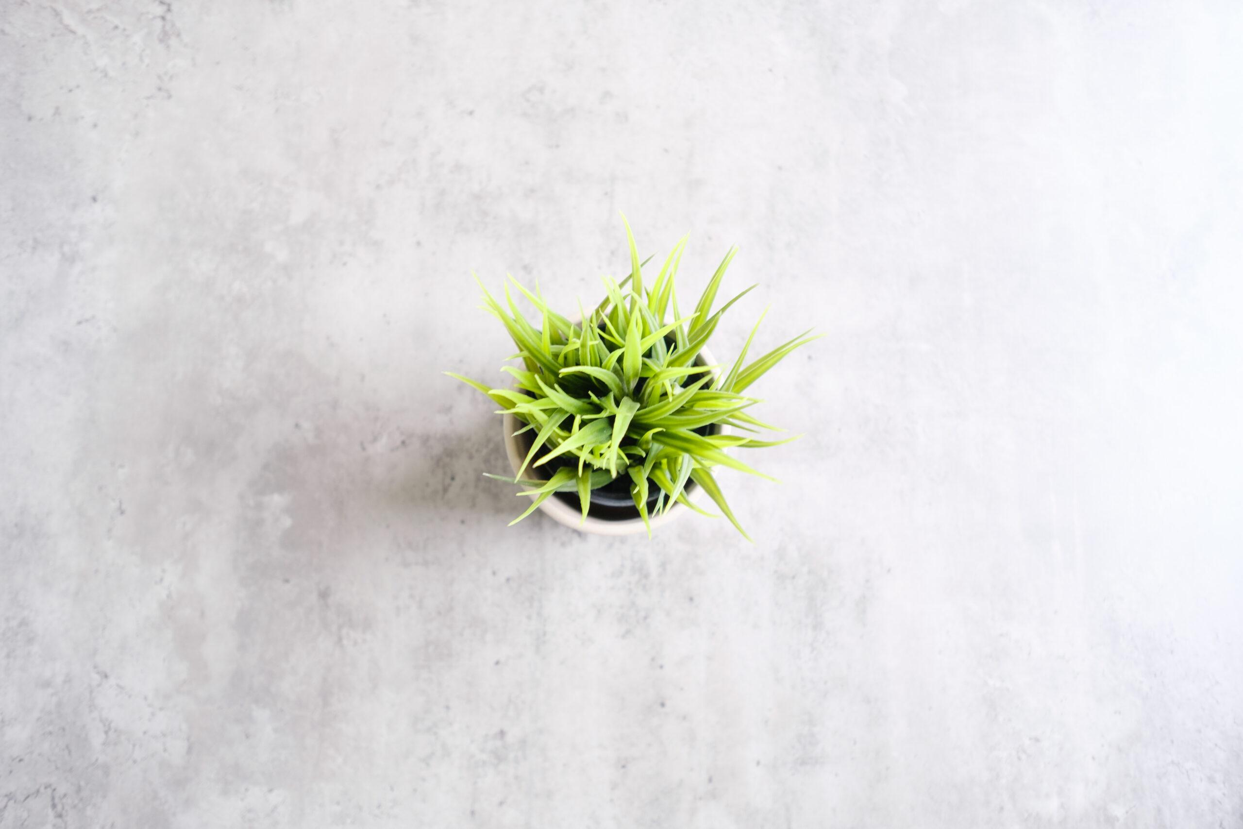Poets Place Decorative Plant